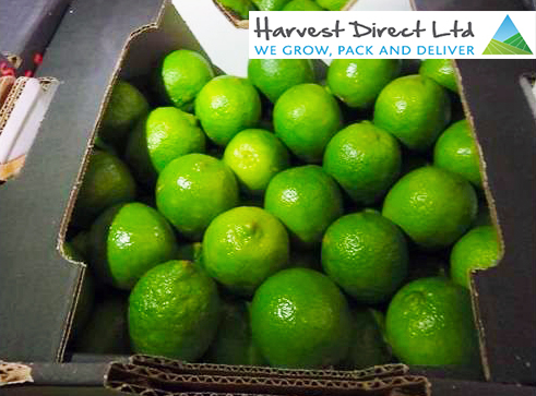 limes-Brazilian-and-Logo
